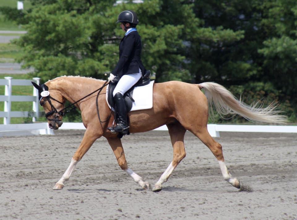 horses-hank2